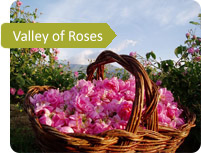 roses valley