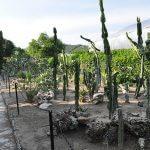 Botanical Garden in Balchik 3